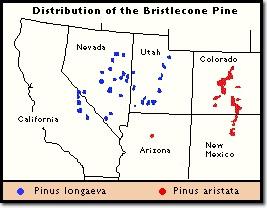 Distribucion_pino_longaeva_mapa