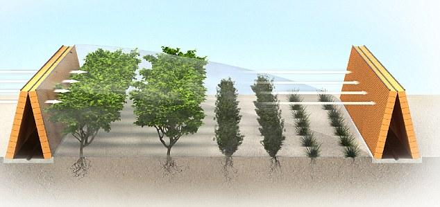 bosque-sahara-proyecto-barrera
