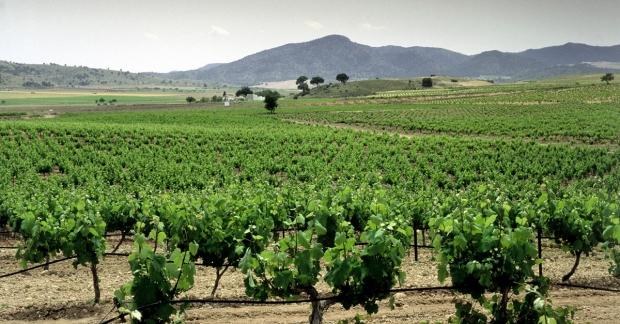 spain-vinyard