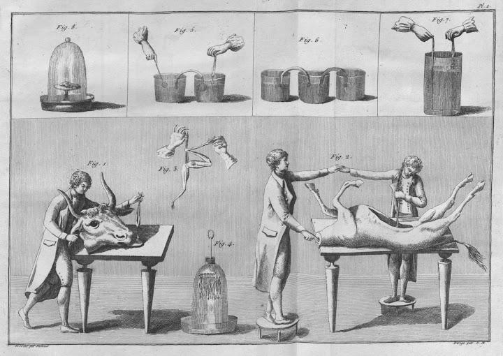 xperiments_with_buckets_animal_parts_Essai_theorique_et_exprimental_sur_le_galvanisme_1804