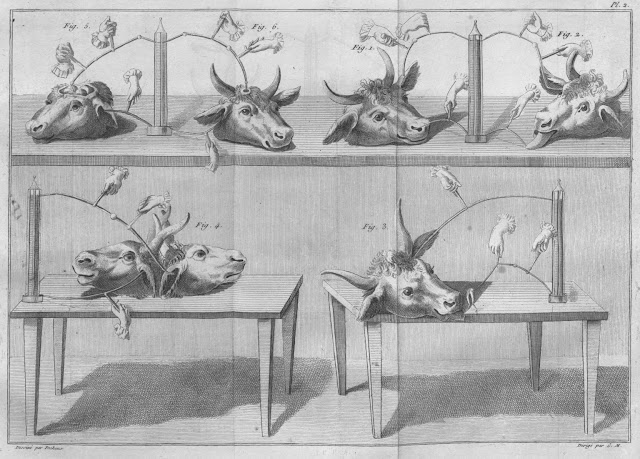 Experiments_with_cow_s_heads_Essai_thorique_et_experimental_sur_le_galvanisme_1804_a