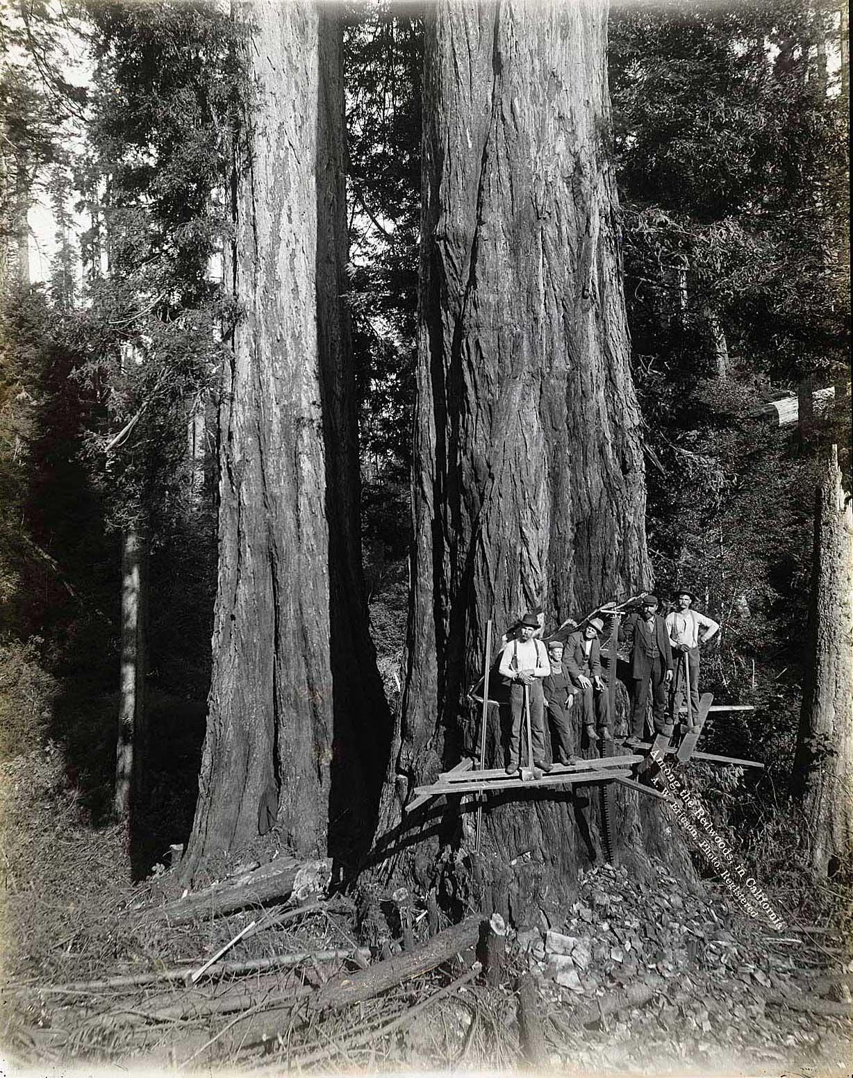 sequoya_4