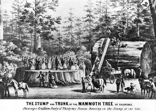 El principio del fin de los bosques de sequoyas / Coastal Redwoods