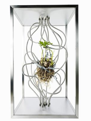 escultura_botanica_Makoto_Azuma