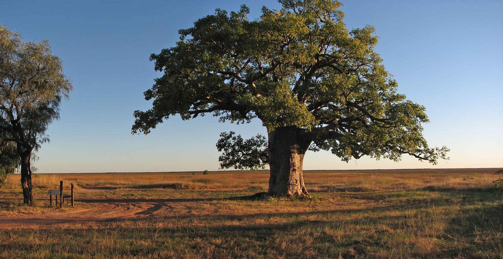 dinner-tree
