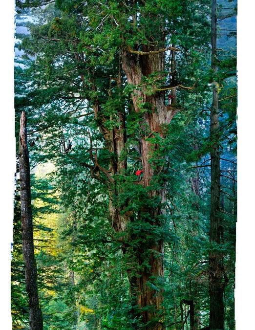 Fotografiando el árbol más alto del mundo: Secuoyas del Parque Nacional Redwood