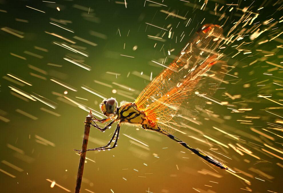 Ganadores del concurso de Fotografía National Geographic 2011